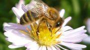Известување до пчеларите во Општината Македонска Каменица