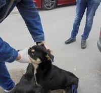 Известување за редовно заловување на бездомни кучиња