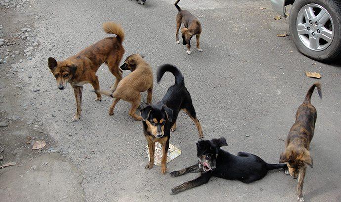 Заловување на кучиња скитници во Македонска Каменица