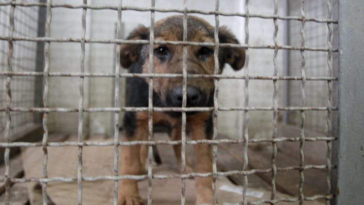 Продолжува хуманиот третман на кучињата скитници во Македонска Каменица