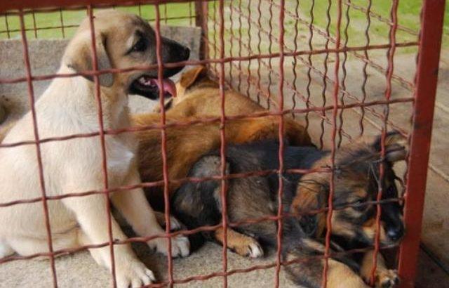 Акција за заловување на кучиња скитници во Македонска Каменица